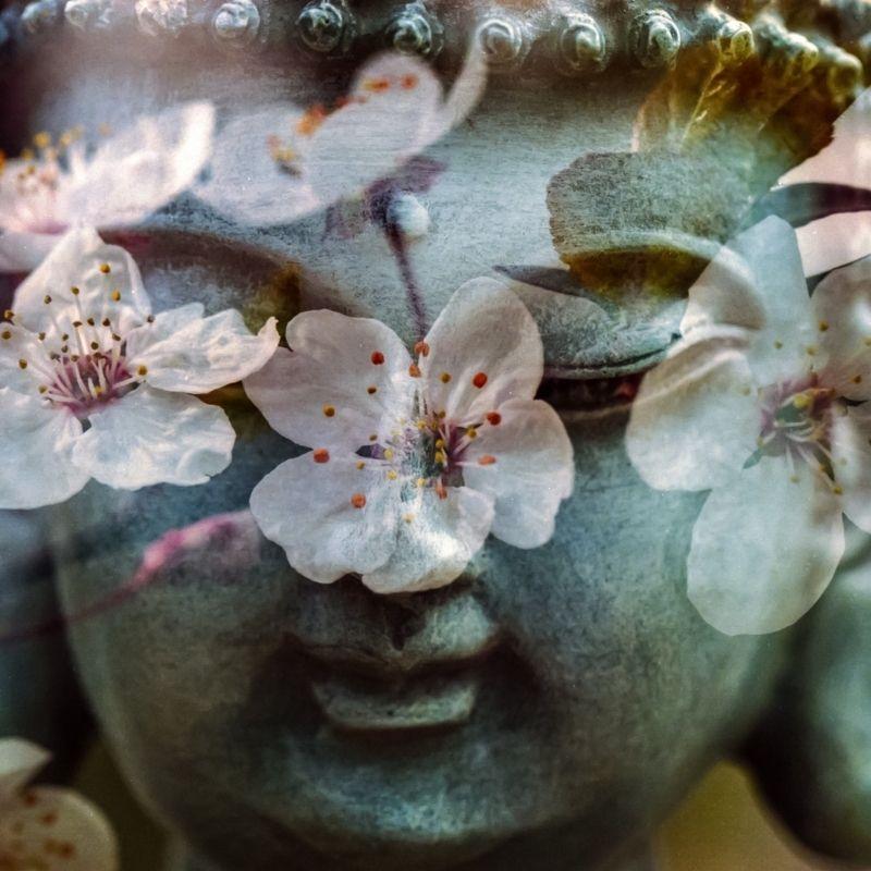 buddha billede hjerte chakra